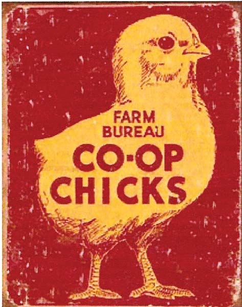 CO-OP Chicks at diecastdepot